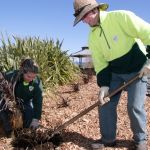 Bushcare, Landcare and Parkcare groups